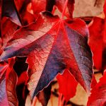 vigne-automne-1536x1197